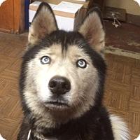Adopt A Pet :: FROSTY - Riverside, CA