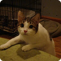 Adopt A Pet :: Sierra - Muncie, IN