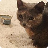 Adopt A Pet :: Skillet - Ogallala, NE