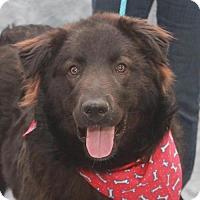 Adopt A Pet :: Quinn-ADOPTED! - Garfield Heights, OH