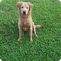Adopt A Pet :: Lisa - Eastsound, WA