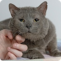 Adopt A Pet :: Rags - Wilmington, DE