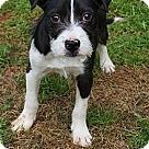 Adopt A Pet :: Theo