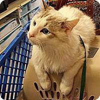 Adopt A Pet :: Wayne - Cincinnati, OH