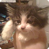 Adopt A Pet :: *Princess - Winder, GA