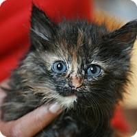Adopt A Pet :: Jada - Canoga Park, CA