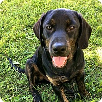 Adopt A Pet :: BRODY - New Windsor, NY