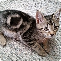 Adopt A Pet :: Awesome - Portland, OR