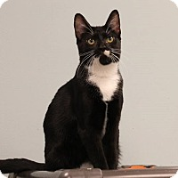 Adopt A Pet :: Arya - Byron Center, MI