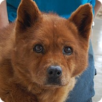 Adopt A Pet :: Kristi - Las Vegas, NV