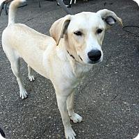 Adopt A Pet :: BELLA - Moosup, CT