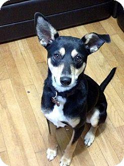 Terrier (Unknown Type, Medium) Mix Dog for adoption in Groton, Massachusetts - Tinsley