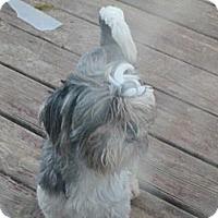Adopt A Pet :: Boss Man - Sardis, TN