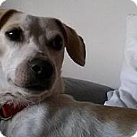 Adopt A Pet :: Honey - Hamilton, ON