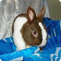 Adopt A Pet :: Joe - North Gower, ON