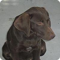 Adopt A Pet :: Sophie - South Jersey, NJ