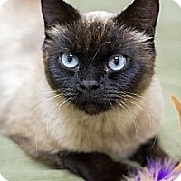 Adopt A Pet :: Talula - Chicago, IL