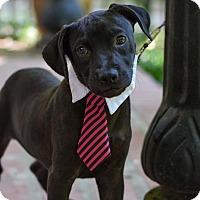 Adopt A Pet :: Owen - Baton Rouge, LA