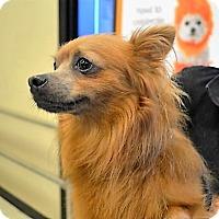 Adopt A Pet :: Copper - Tavares, FL