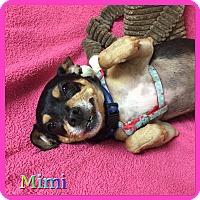 Adopt A Pet :: Mimi - Hollywood, FL