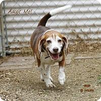 Adopt A Pet :: Bob - Camden, DE