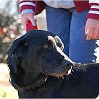 Adopt A Pet :: David - Cumming, GA
