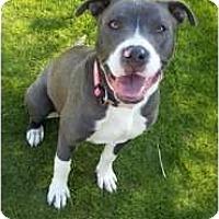Adopt A Pet :: Stella - Bakersfield, CA