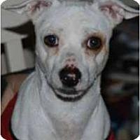 Adopt A Pet :: Riely in Houston - Houston, TX