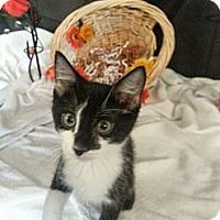 Adopt A Pet :: Tatum - Clearfield, UT