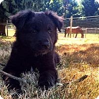 Adopt A Pet :: Heidi*Adoption Pending* - Mill Creek, WA