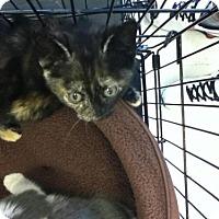 Adopt A Pet :: Hayley - Hamilton, ON