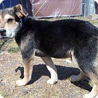 Adopt A Pet :: STUART - Medford, WI