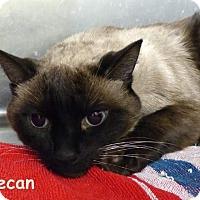 Adopt A Pet :: Pecan and Walnut - Fairborn, OH
