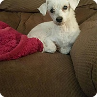 Adopt A Pet :: Mikey - Henderson, NV