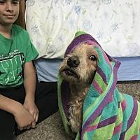 Adopt A Pet :: Bernstein - Castaic, CA