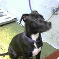 Adopt A Pet :: ELI - Atlanta, GA
