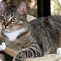 Adopt A Pet :: Gladys - New Port Richey, FL
