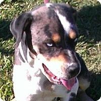 Adopt A Pet :: Phoenix - Justin, TX