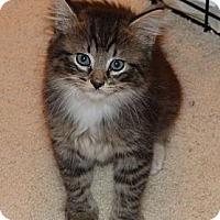 Adopt A Pet :: Alexander - Lighthouse Point, FL