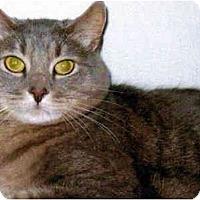 Adopt A Pet :: Jesse - Medway, MA