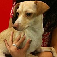 Adopt A Pet :: SunnyBear - Fresno, CA