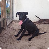Adopt A Pet :: DALLAS - Boca Raton, FL