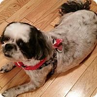 Adopt A Pet :: Whitey - Homer Glen, IL