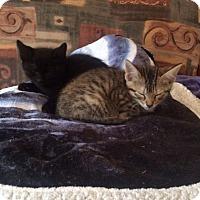 Adopt A Pet :: Tootsie and La Quinta - Chicago, IL
