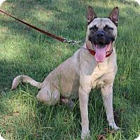 Adopt A Pet :: Zuma - West Springfield, MA