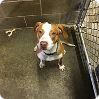 Adopt A Pet :: Venice - Lake Odessa, MI