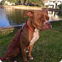 Adopt A Pet :: Cashew - Orlando, FL