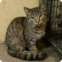 Adopt A Pet :: Princess Leia - Morganton, NC
