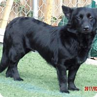 Adopt A Pet :: Barbie (20 lb) Sweetheart! - Williamsport, MD