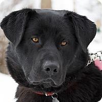 Adopt A Pet :: Bear - Ile-Perrot, QC